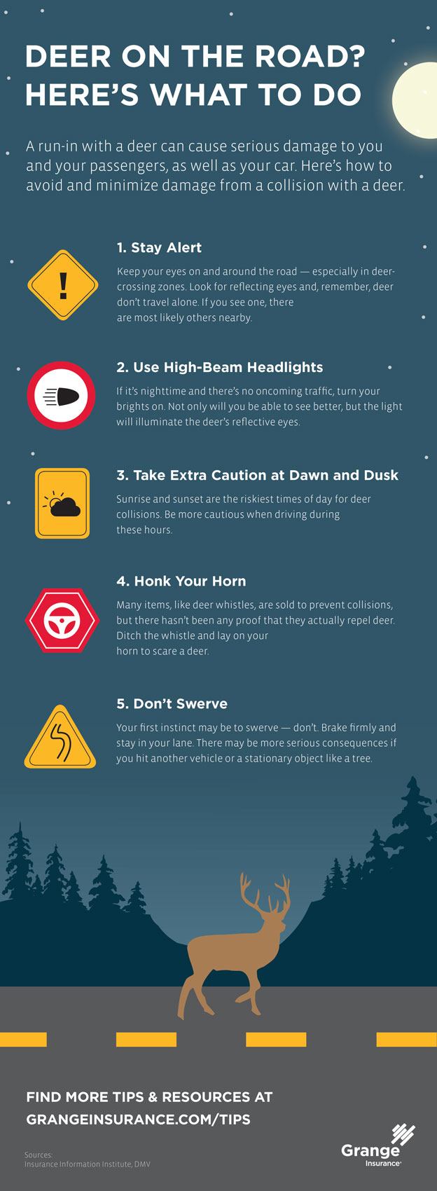 Deer on the road? Here's what to do